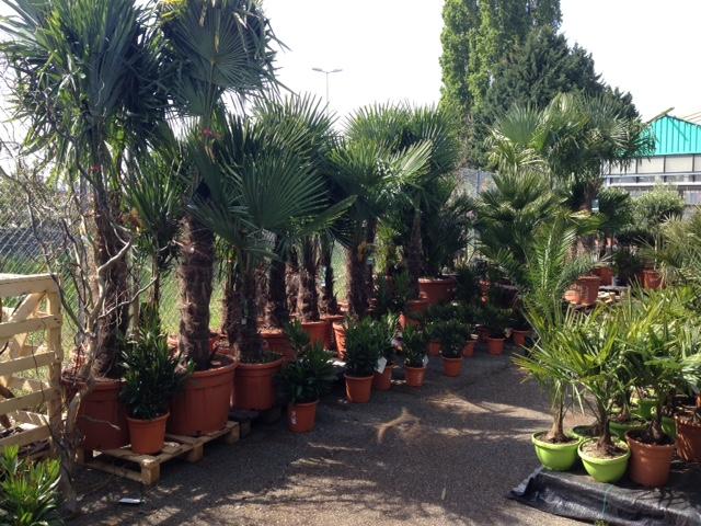 jardin issler p pini riste fleuriste et jardinerie